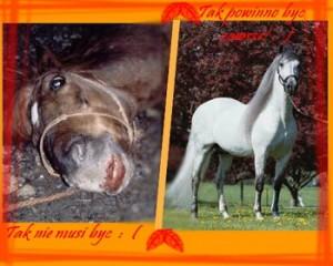 konie 3