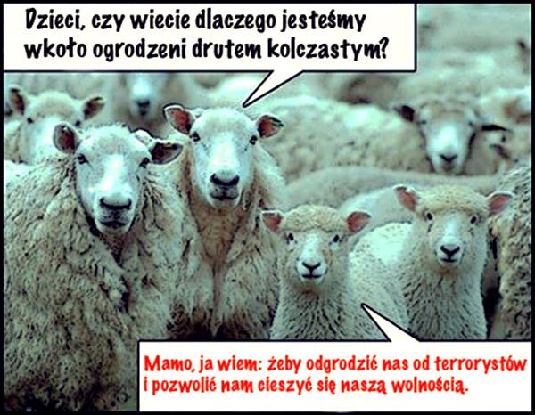 owce terroru